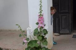 i fiori non mancano