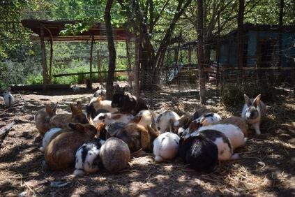 conigli a colazione - fattoria didattica