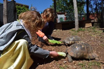 tartarughe affamate - fattoria momigliano