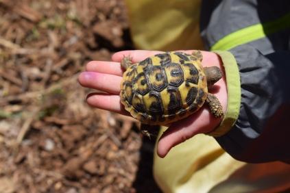 baby tartaruga - fattoria didattica