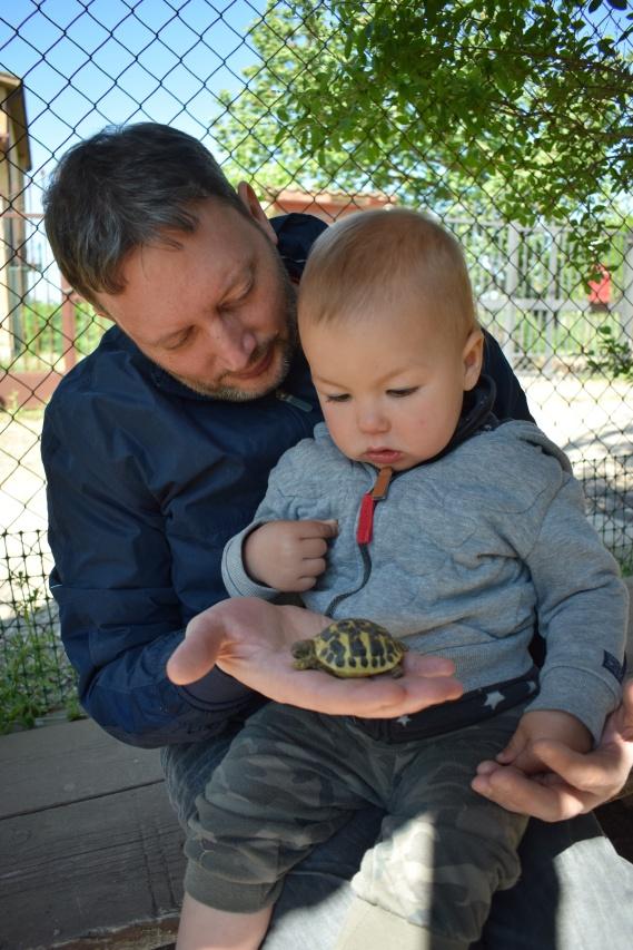 mini tartaruga - fattoria didattica