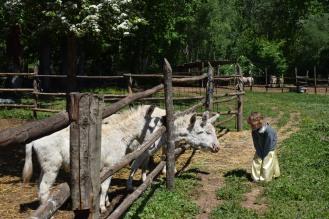 asini albini curiosi - fattoria didattica