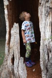 Parco di Veio, albero cavo
